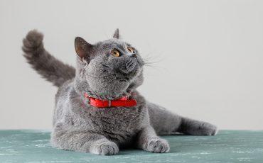 Vómitos en gatos: por qué debemos prestarles mucha atención
