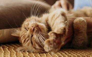 5 Errores que no debes de cometer al educar a tu gato